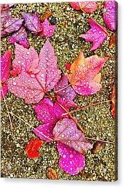 Autumn Dew Acrylic Print