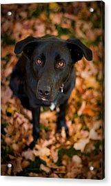 Autumn Dog Acrylic Print by Adam Romanowicz