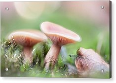Acrylic Print featuring the photograph Autumn Dream by Dirk Ercken
