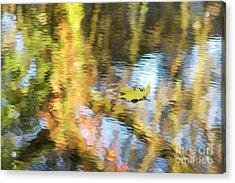 Autumn Drift Acrylic Print by Tim Gainey
