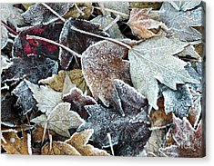 Acrylic Print featuring the photograph Autumn Ends, Winter Begins 1 by Linda Lees