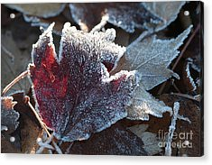 Acrylic Print featuring the photograph Autumn Ends, Winter Begins 2 by Linda Lees