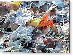 Acrylic Print featuring the photograph Autumn Ends, Winter Begins 3 by Linda Lees