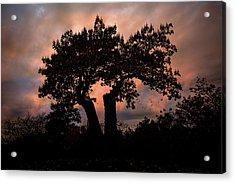 Autumn Evening Sunset Silhouette Acrylic Print