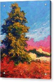 Autumn Evergreen  Acrylic Print
