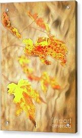 Autumn Fall Color Maple Leaves In The Blue Ridge Ap Acrylic Print by Dan Carmichael