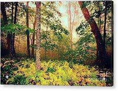 Autumn Fall Colors - Brilliant Ferns In The Blue Ridge Ap Acrylic Print