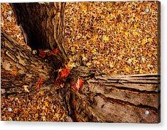 Autumn Fall  Dream Acrylic Print by James BO  Insogna
