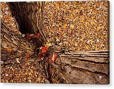 Autumn Fall Acrylic Print by James BO  Insogna