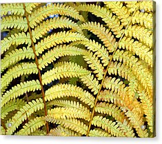 Autumn Ferns Acrylic Print by Tony Ramos