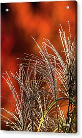 Autumn Fire - 1 Acrylic Print