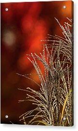 Autumn Fire - 2 Acrylic Print