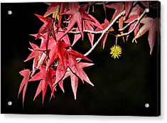 Acrylic Print featuring the photograph Autumn Fire by AJ Schibig