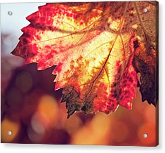 Acrylic Print featuring the photograph Autumn Fire by Melanie Alexandra Price