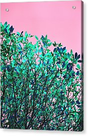 Acrylic Print featuring the photograph Autumn Flames - Pink by Rebecca Harman