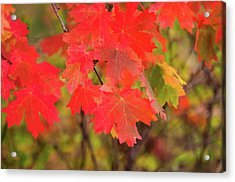 Acrylic Print featuring the photograph Autumn Flash by Bryan Carter
