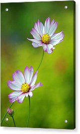 Acrylic Print featuring the photograph Autumn Flowers by Byron Varvarigos