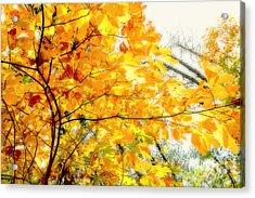 Autumn Flutter Acrylic Print by John Mueller