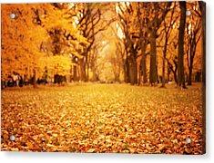Autumn Foliage - Central Park - New York City Acrylic Print by Vivienne Gucwa