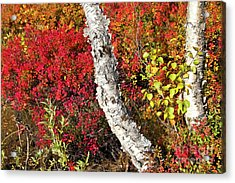 Autumn Foliage In Finland Acrylic Print by Heiko Koehrer-Wagner
