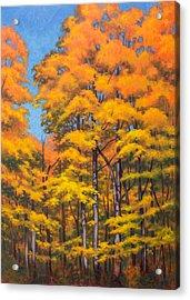 Autumn Forest 1 Acrylic Print by Fiona Craig