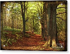 Autumn Forest Acrylic Print by Angela Doelling AD DESIGN Photo and PhotoArt