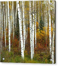 Autumn Forest Beauty Acrylic Print