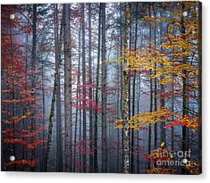 Acrylic Print featuring the photograph Autumn Forest In Fog by Elena Elisseeva