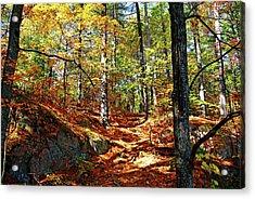 Autumn Forest Killarney Acrylic Print