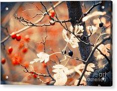Autumn Forest Acrylic Print by Konstantin Sevostyanov