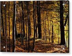 Autumn Forest Acrylic Print by Lutz Baar