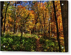 Autumn Forest Path At Johnson's Mound Acrylic Print