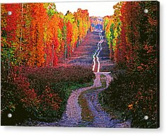 Autumn Forest Track Acrylic Print by Dennis Cox WorldViews