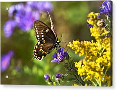 Autumn Garden Butterfly Acrylic Print by Christina Rollo