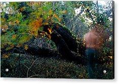 Autumn Ghost Acrylic Print by Tim Nichols