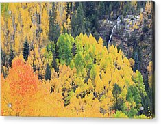 Autumn Glory Acrylic Print