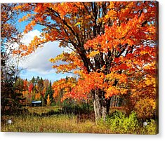Acrylic Print featuring the photograph Autumn Glory by Gigi Dequanne
