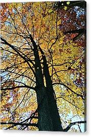 Autumn Glory Acrylic Print