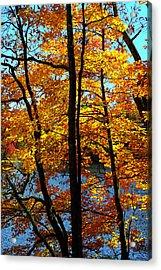 Autumn Gold Acrylic Print by Alan Lenk