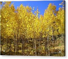 Autumn Gold Acrylic Print by Ellen Heaverlo