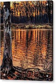 Autumn Gold Acrylic Print