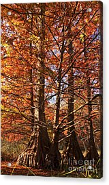 Acrylic Print featuring the photograph Autumn Grandeur At Lake Murray by Tamyra Ayles