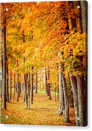 Autumn Grove  Acrylic Print by Lisa Russo