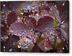 autumn Huckleberry leaves macro in autumn Acrylic Print by Ed Book