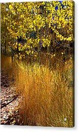 Acrylic Print featuring the photograph Autumn Hues by Lynn Bawden