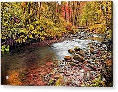 Autumn In An Oregon Rain Forest  Acrylic Print