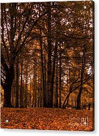 Autumn In Colligan Wood Acrylic Print