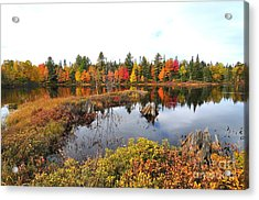 Autumn In Coos County Acrylic Print by Catherine Reusch Daley
