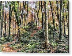 Autumn In Jordan Beech Wood Acrylic Print