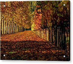 Autumn In Napa Valley Acrylic Print by Bill Gallagher